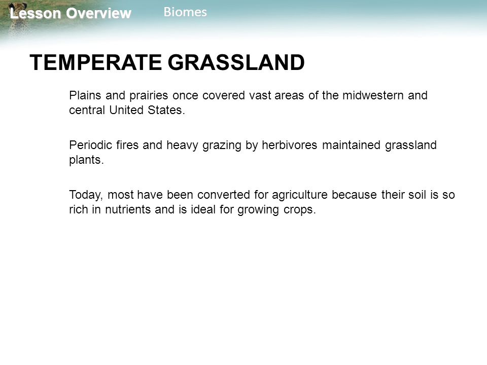 Lesson Overview Lesson OverviewBiomes TEMPERATE GRASSLAND Plains and prairies once covered vast areas of the midwestern and central United States. Per