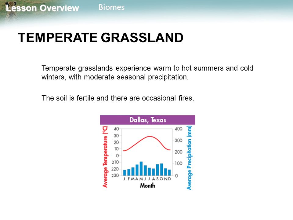Lesson Overview Lesson OverviewBiomes TEMPERATE GRASSLAND Temperate grasslands experience warm to hot summers and cold winters, with moderate seasonal