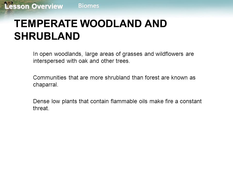 Lesson Overview Lesson OverviewBiomes TEMPERATE WOODLAND AND SHRUBLAND In open woodlands, large areas of grasses and wildflowers are interspersed with