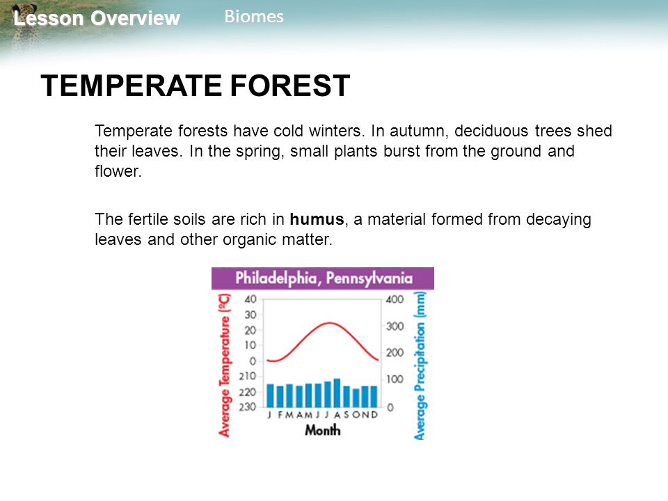 Lesson Overview Lesson OverviewBiomes TEMPERATE FOREST Temperate forests have cold winters. In autumn, deciduous trees shed their leaves. In the sprin