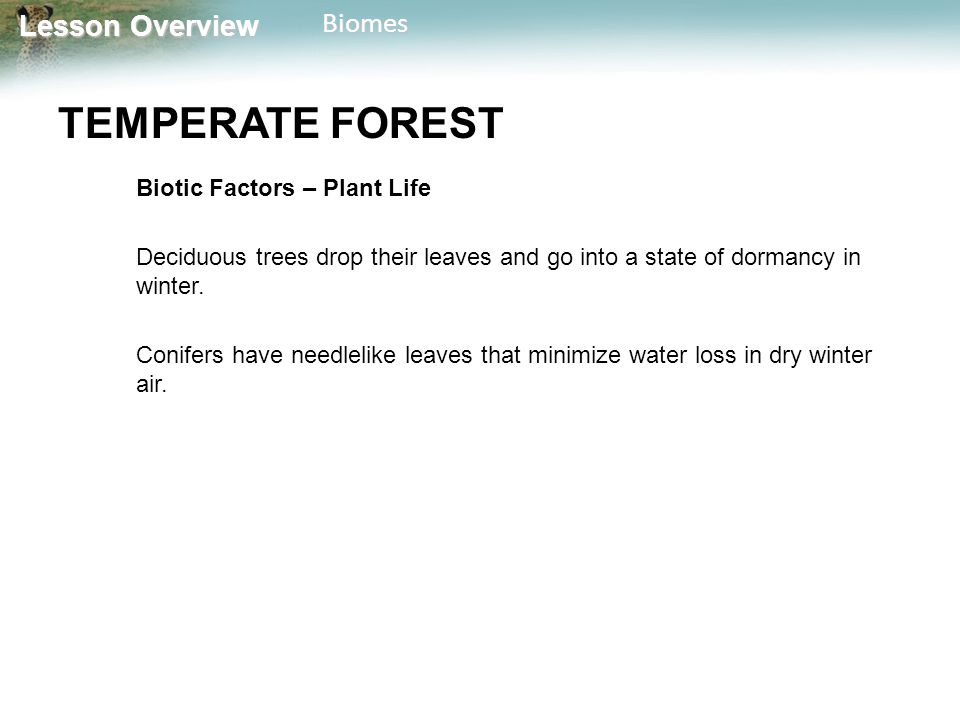 Lesson Overview Lesson OverviewBiomes TEMPERATE FOREST Biotic Factors – Plant Life Deciduous trees drop their leaves and go into a state of dormancy i