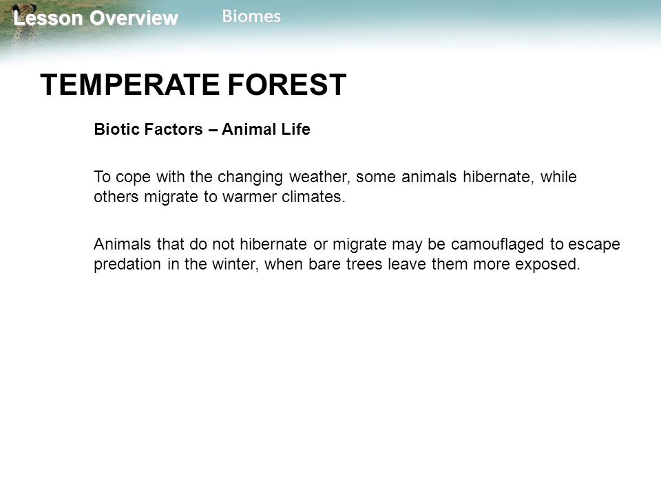 Lesson Overview Lesson OverviewBiomes TEMPERATE FOREST Biotic Factors – Animal Life To cope with the changing weather, some animals hibernate, while o