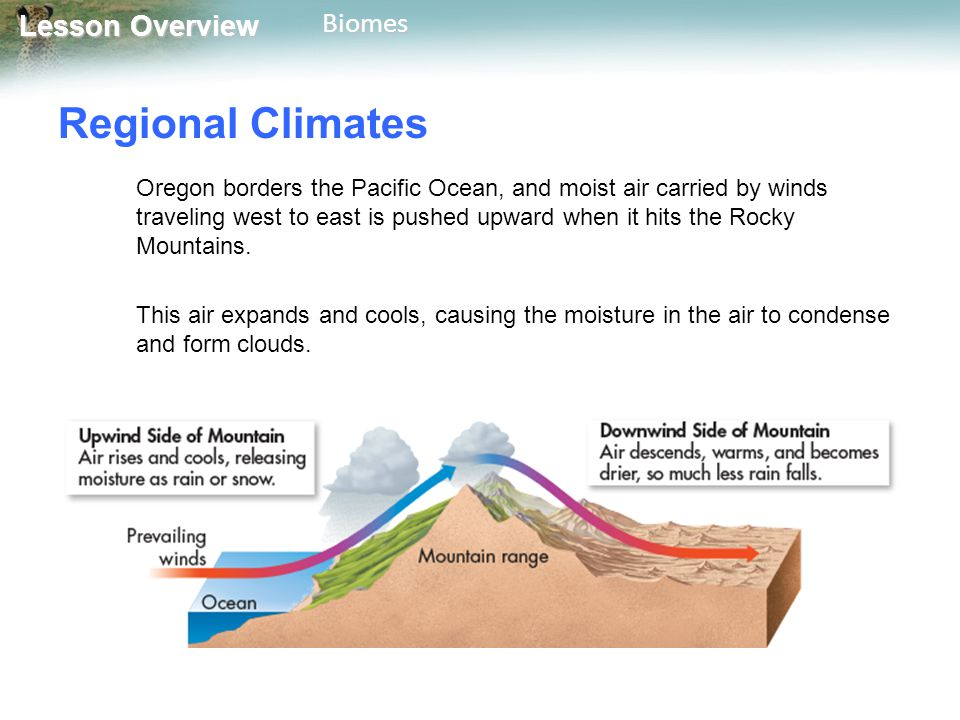 Lesson Overview Lesson OverviewBiomes Regional Climates The clouds drop rain or snow, mainly on the upwind side of the mountains.