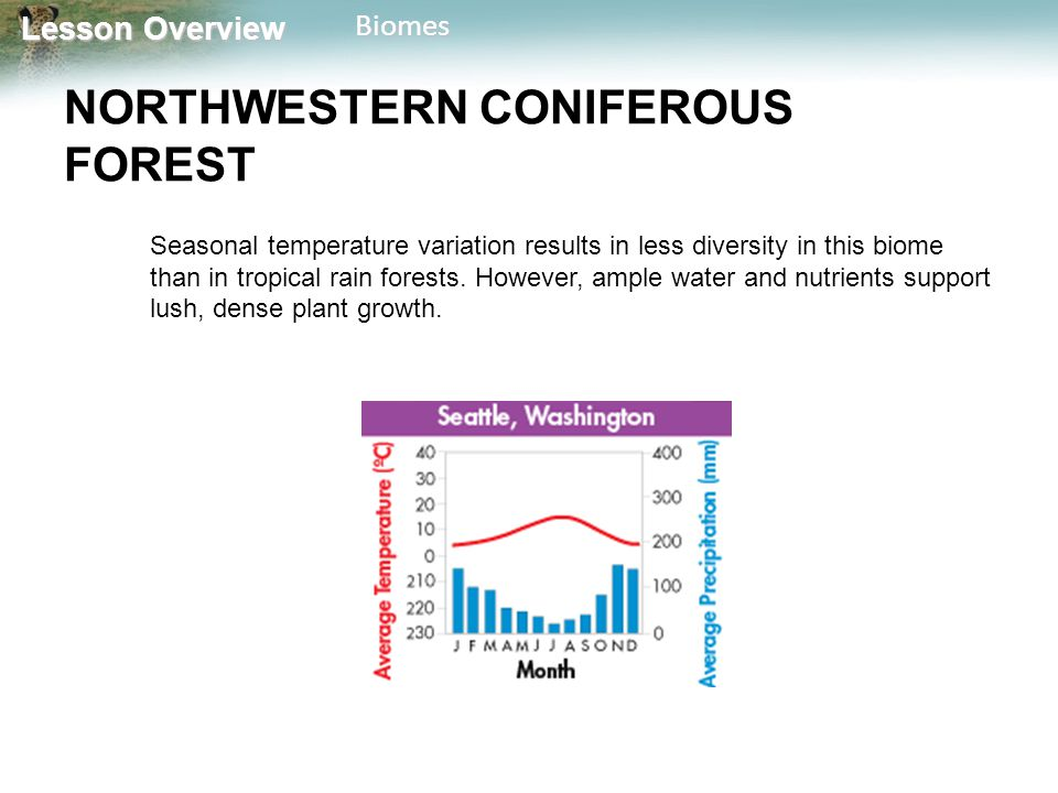 Lesson Overview Lesson OverviewBiomes NORTHWESTERN CONIFEROUS FOREST Seasonal temperature variation results in less diversity in this biome than in tr