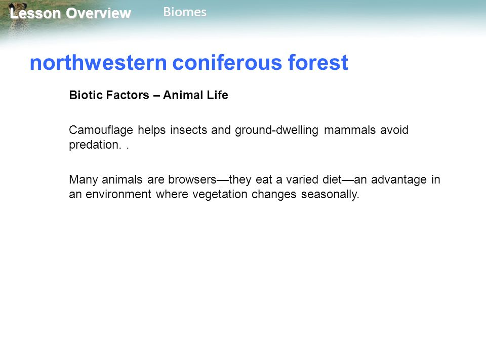 Lesson Overview Lesson OverviewBiomes northwestern coniferous forest Biotic Factors – Animal Life Camouflage helps insects and ground-dwelling mammals