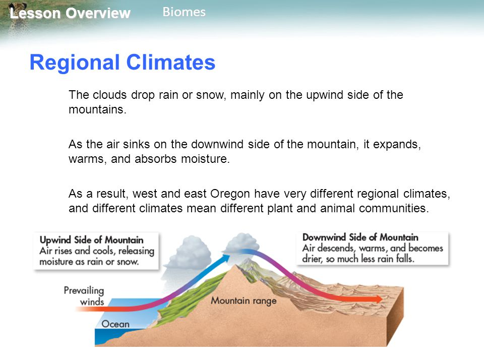 Lesson Overview Lesson OverviewBiomes DESERT Biotic Factors – Animal Life Many desert animals get the water they need from the food they eat.