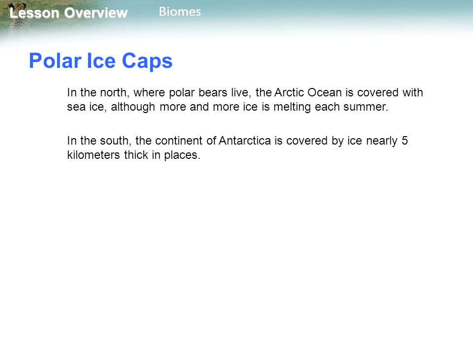 Lesson Overview Lesson OverviewBiomes Polar Ice Caps In the north, where polar bears live, the Arctic Ocean is covered with sea ice, although more and