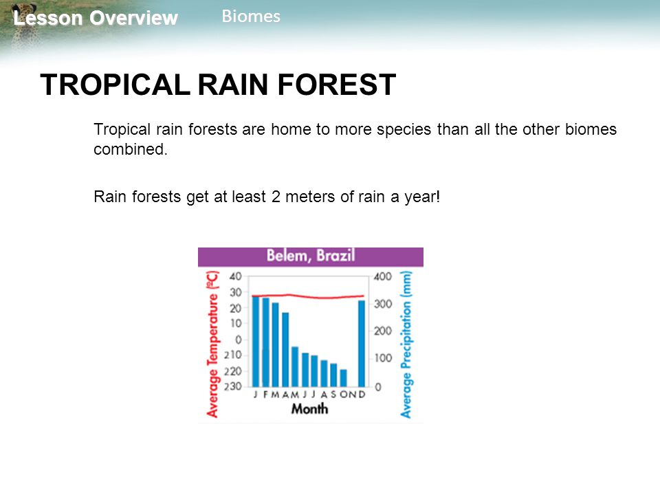 Lesson Overview Lesson OverviewBiomes TROPICAL RAIN FOREST Tall trees form a dense, leafy covering called a canopy from 50 to 80 meters above the forest floor.