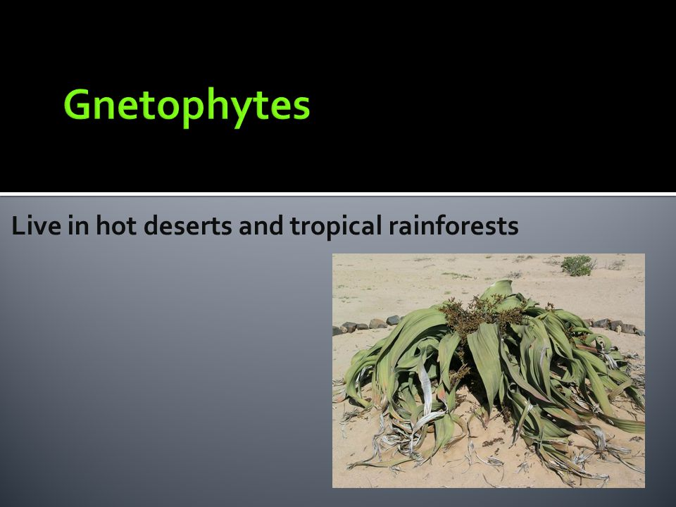 Live in hot deserts and tropical rainforests