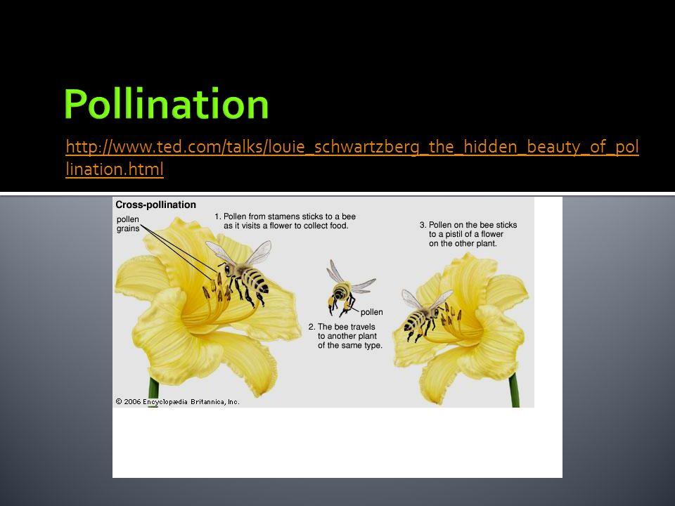 http://www.ted.com/talks/louie_schwartzberg_the_hidden_beauty_of_pol lination.html
