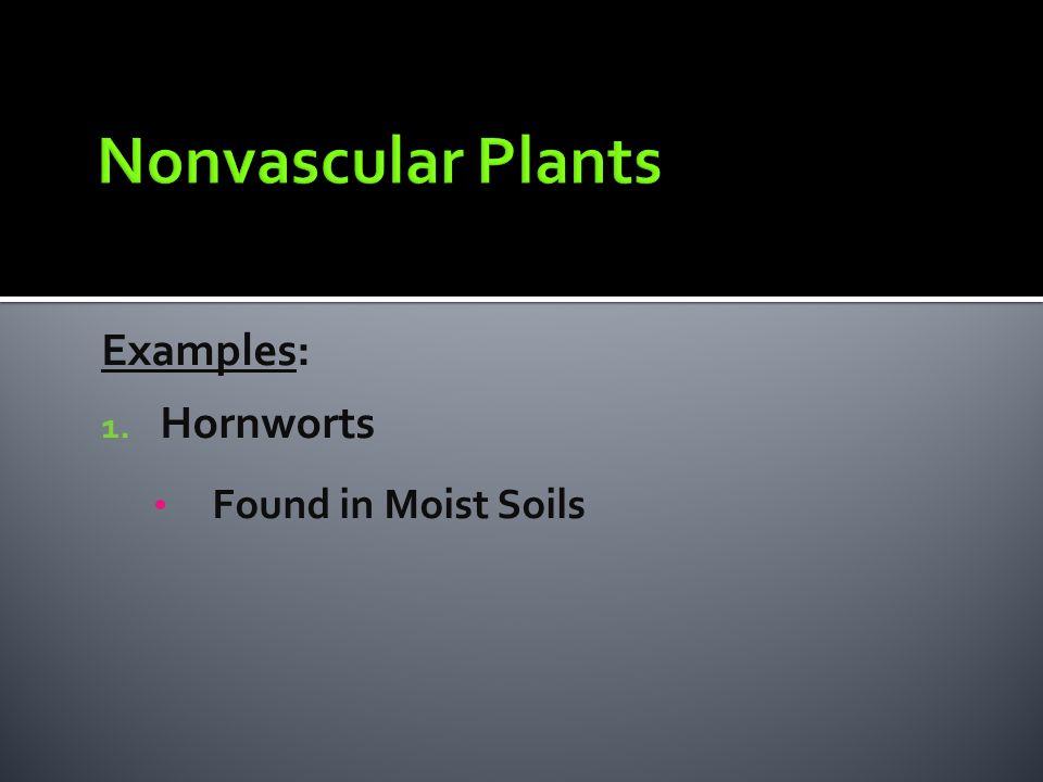 Examples: 1. Hornworts Found in Moist Soils