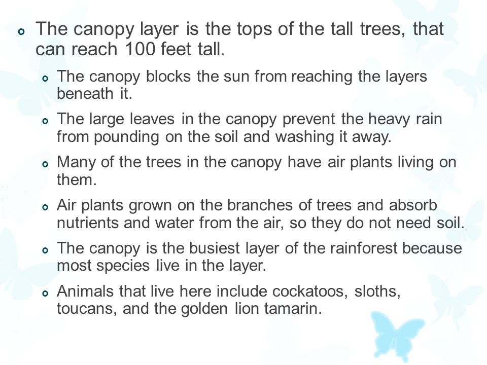  The canopy layer is the tops of the tall trees, that can reach 100 feet tall.  The canopy blocks the sun from reaching the layers beneath it.  The