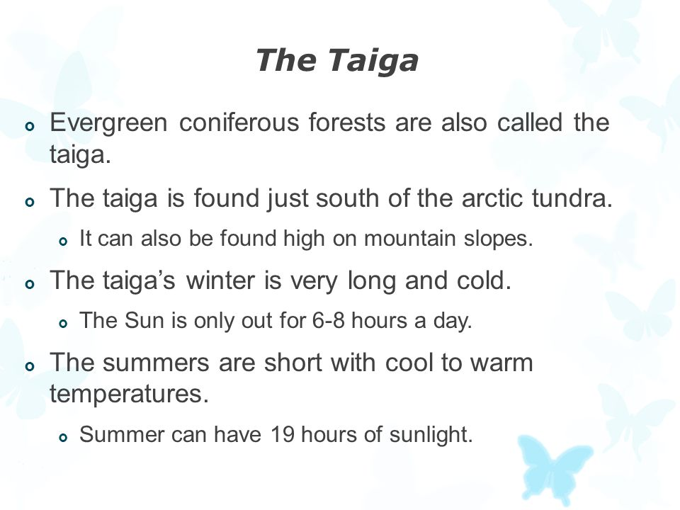 The Taiga  Evergreen coniferous forests are also called the taiga.  The taiga is found just south of the arctic tundra.  It can also be found high