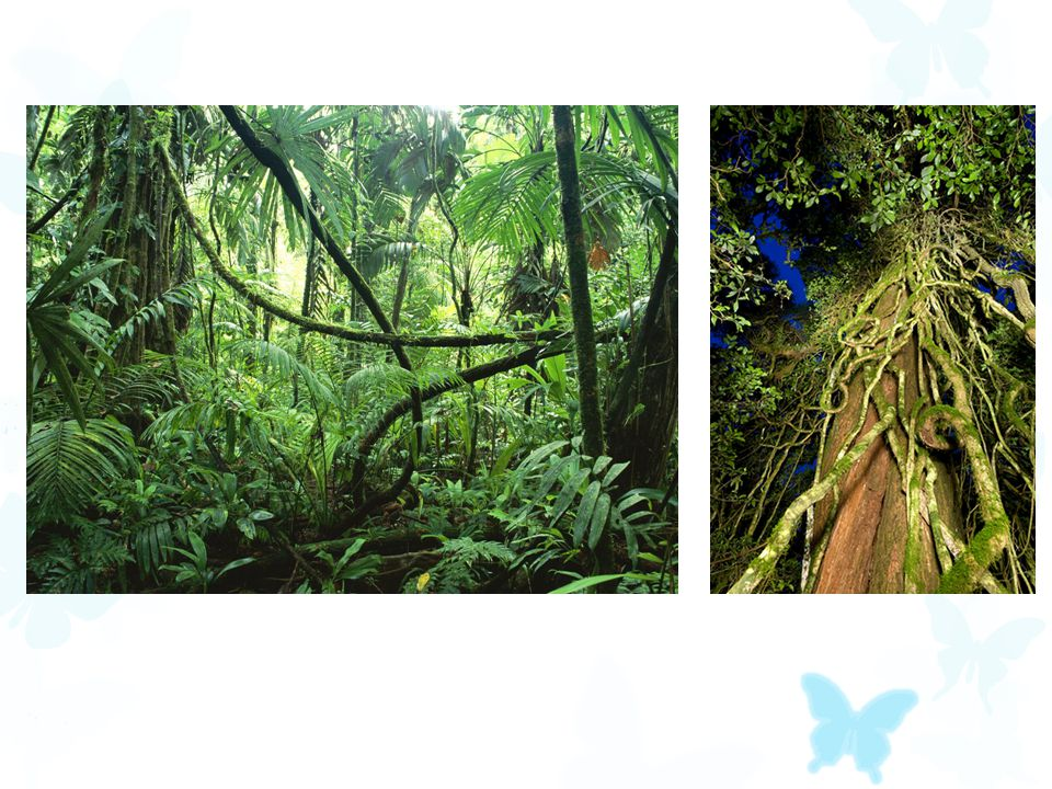  Tropical rainforests have a very high net primary productivity (they produce a lot of plants, which do a lot of photosynthesis).