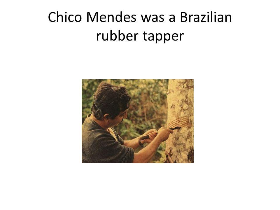 Chico Mendes was a Brazilian rubber tapper