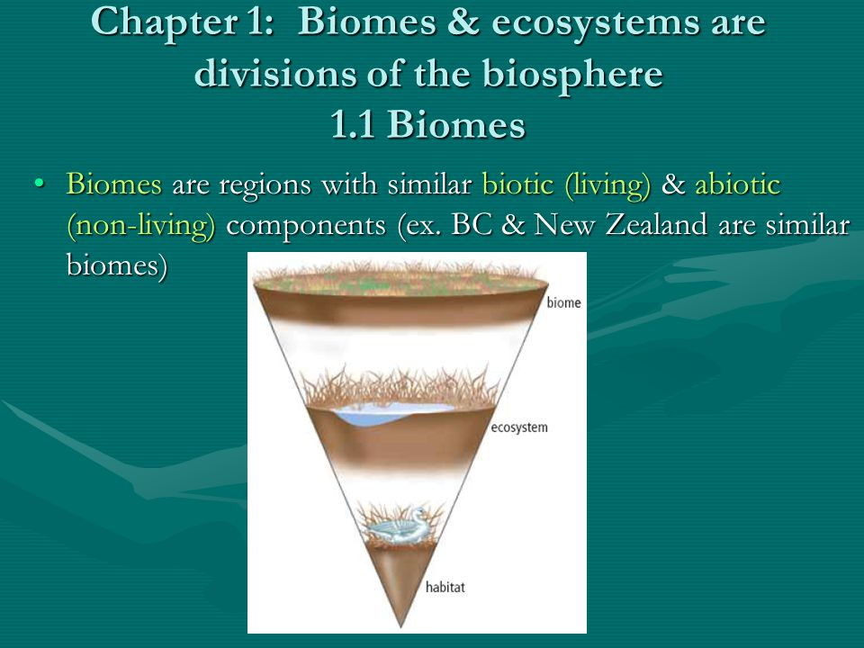 Classification of Biomes Biomes are classified based on many characteristics: water availability, temperature & interactions between biotic & abiotic factors.Biomes are classified based on many characteristics: water availability, temperature & interactions between biotic & abiotic factors.