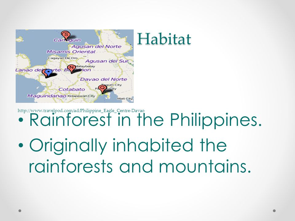 Habitat Habitat Rainforest in the Philippines. Originally inhabited the rainforests and mountains.