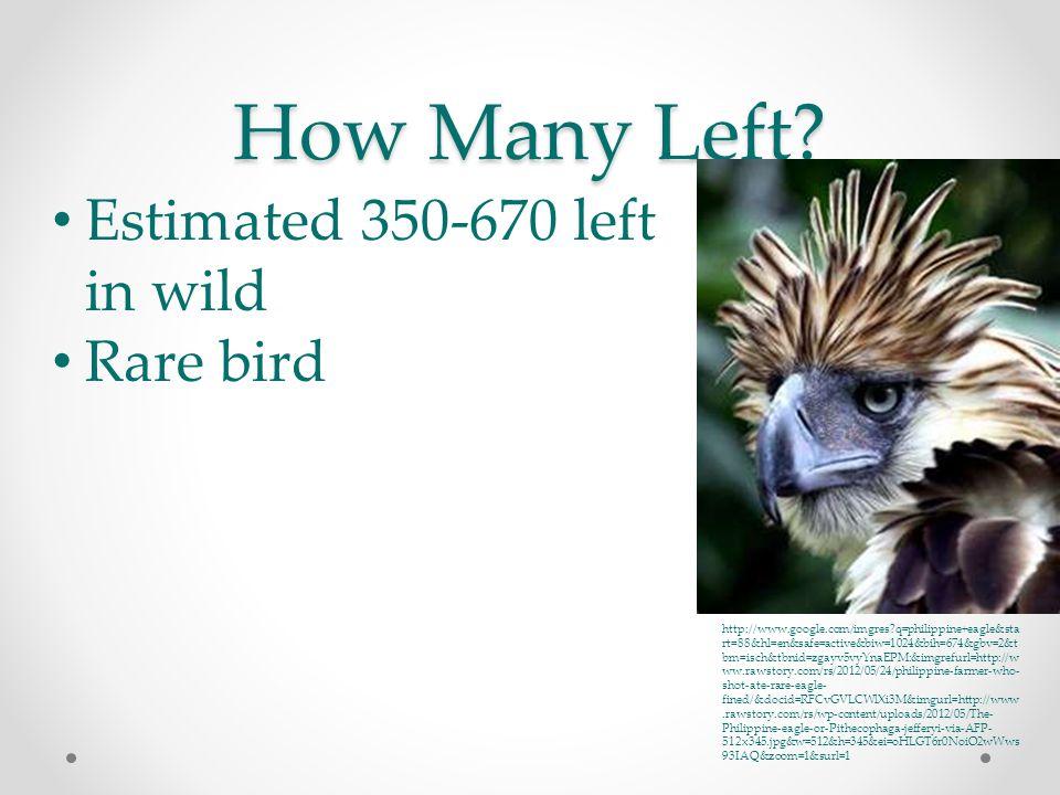 How Many Left? Estimated 350-670 left in wild Rare bird http://www.google.com/imgres?q=philippine+eagle&sta rt=88&hl=en&safe=active&biw=1024&bih=674&g