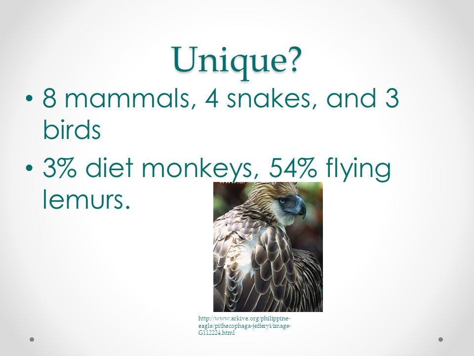 Unique. 8 mammals, 4 snakes, and 3 birds 3% diet monkeys, 54% flying lemurs.