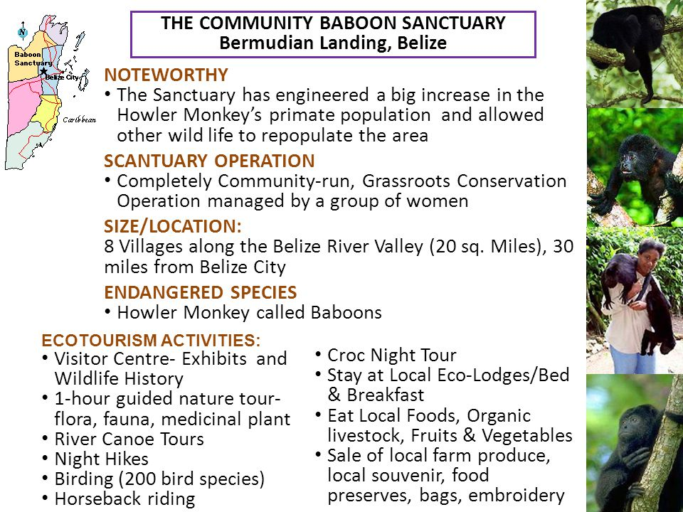 THE COMMUNITY BABOON SANCTUARY Bermudian Landing, Belize NOTEWORTHY The Sanctuary has engineered a big increase in the Howler Monkey's primate population and allowed other wild life to repopulate the area SCANTUARY OPERATION Completely Community-run, Grassroots Conservation Operation managed by a group of women SIZE/LOCATION: 8 Villages along the Belize River Valley (20 sq.
