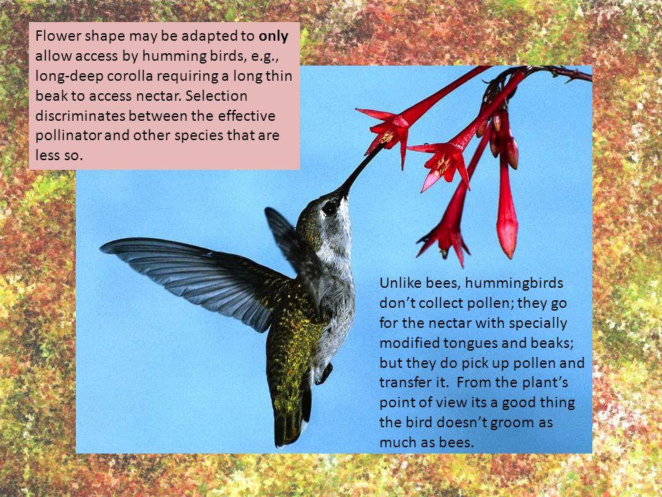 Anderson B., Cole W.W., Barrett S.C.H.2005. Specialized bird perch aids cross-pollination.