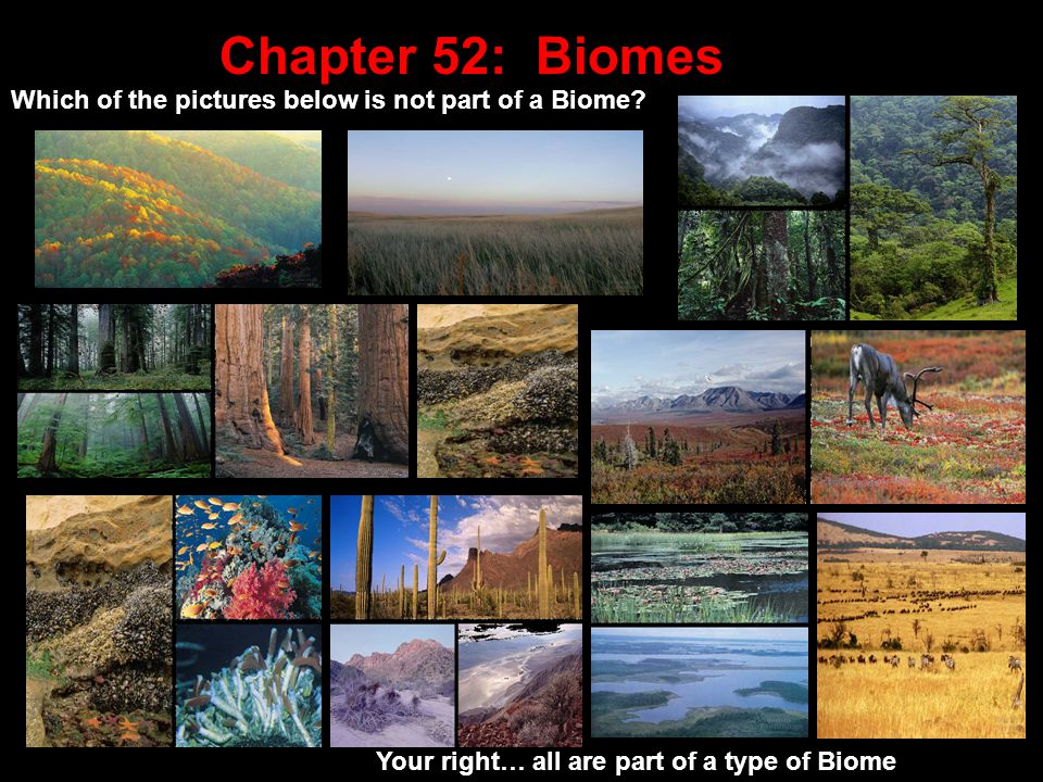 Biome Definition: Large area of the world containing very similar animals and plants usually named by their most common __________ Vegetation You have all studied biomes in Freshman Biology or Geography class Let's find out how much you remember!.