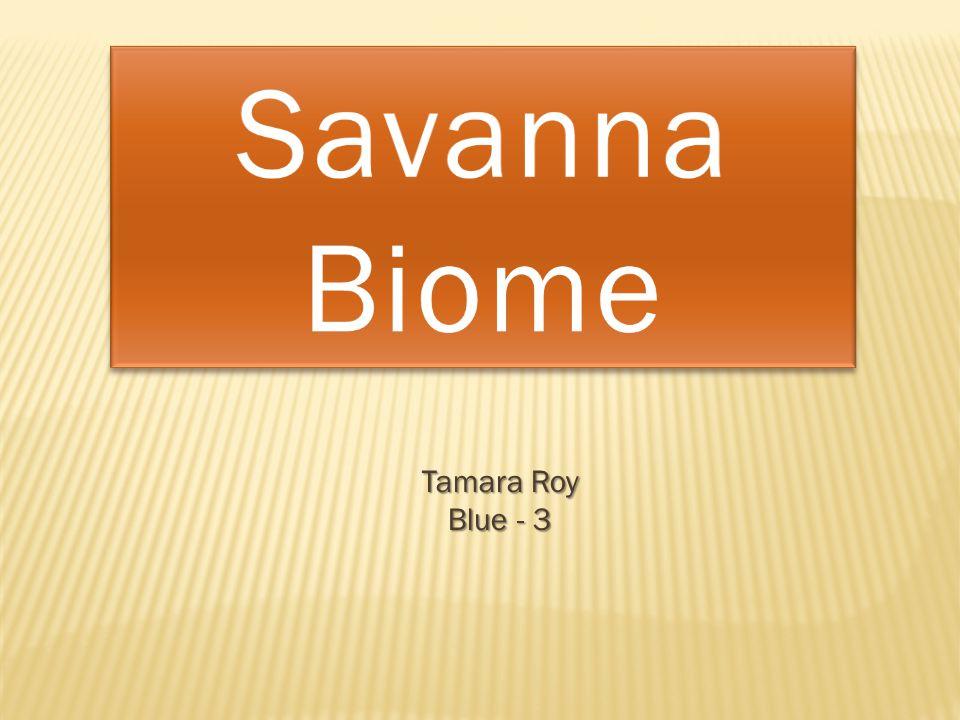 Tamara Roy Blue - 3
