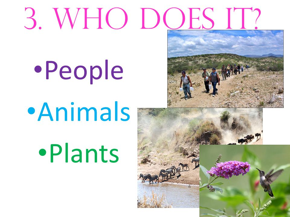 3. who does it? People Animals Plants