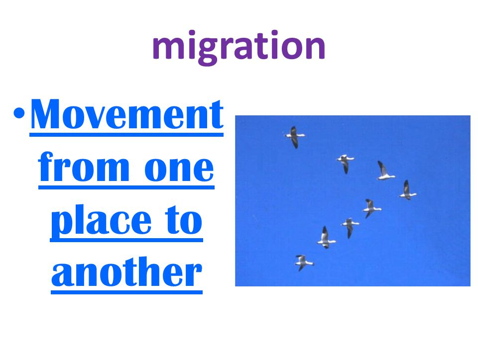 migration Movement from one place to another