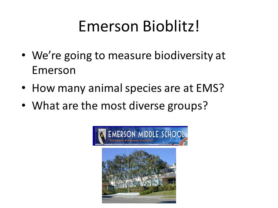 Emerson Bioblitz.