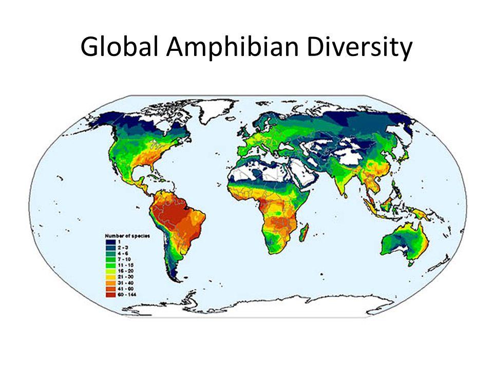 Global Amphibian Diversity