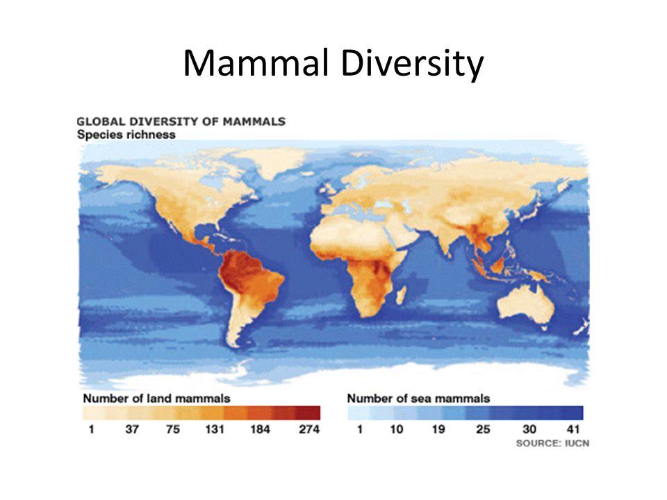 Mammal Diversity