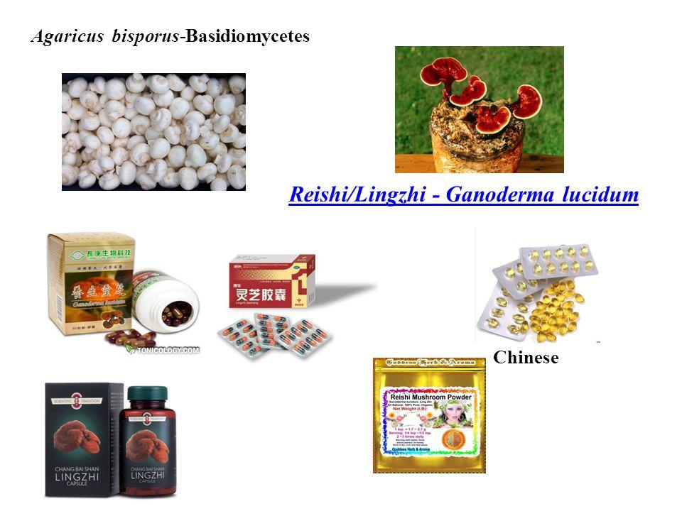 Agaricus bisporus-Basidiomycetes Reishi/Lingzhi - Ganoderma lucidum Chinese
