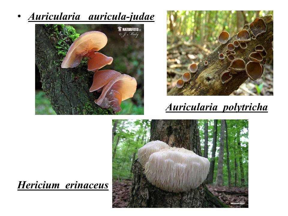 Auricularia auricula-judae Auricularia polytricha Hericium erinaceus