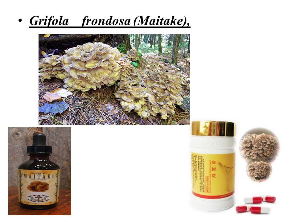 Grifola frondosa (Maitake),