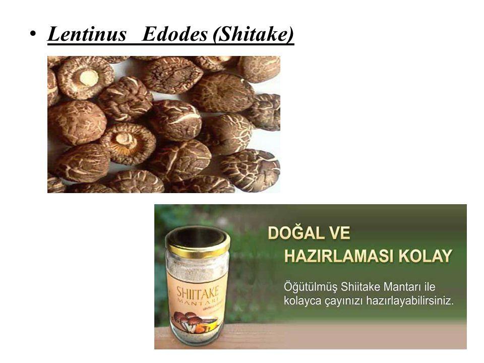 Lentinus Edodes (Shitake)