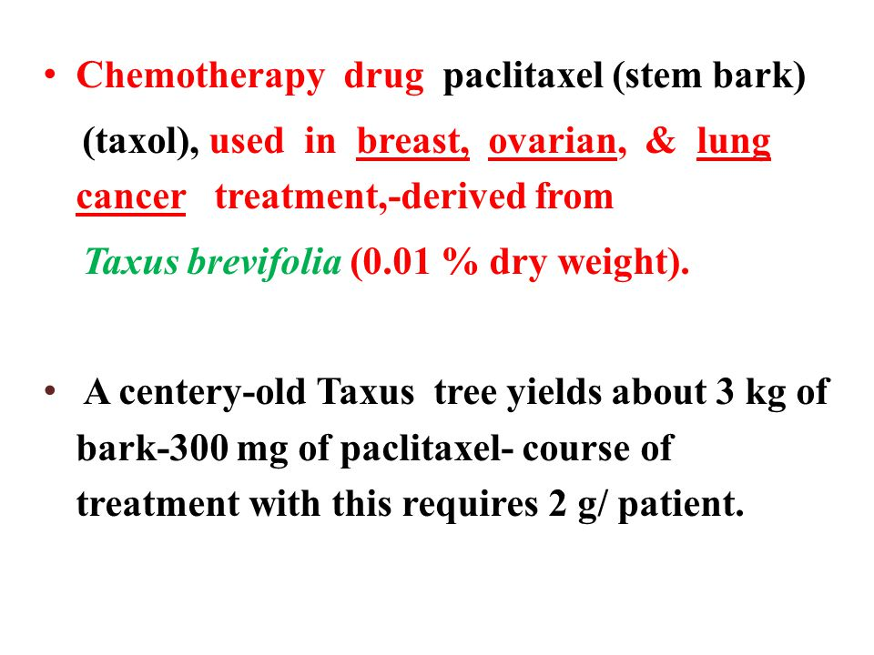 Chemotherapy drug paclitaxel (stem bark) (taxol), used in breast, ovarian, & lung cancer treatment,-derived from Taxus brevifolia (0.01 % dry weight).