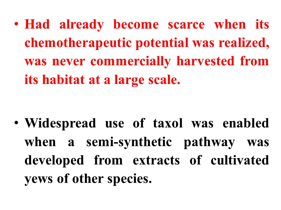 Had already become scarce when its chemotherapeutic potential was realized, was never commercially harvested from its habitat at a large scale.
