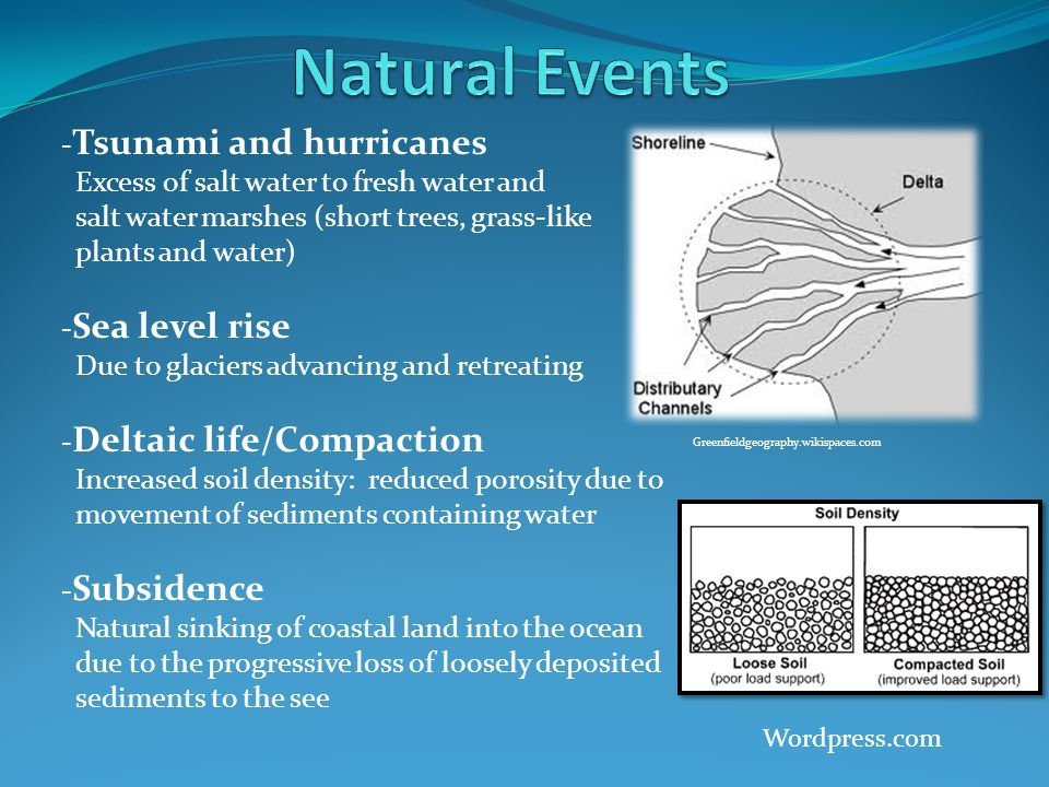- Tsunami and hurricanes Excess of salt water to fresh water and salt water marshes (short trees, grass-like plants and water) - Sea level rise Due to glaciers advancing and retreating - Deltaic life/Compaction Increased soil density: reduced porosity due to movement of sediments containing water - Subsidence Natural sinking of coastal land into the ocean due to the progressive loss of loosely deposited sediments to the see Greenfieldgeography.wikispaces.com Wordpress.com