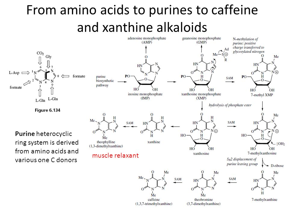 From amino acids to purines to caffeine and xanthine alkaloids Purine heterocyclic ring system is derived from amino acids and various one C donors mu