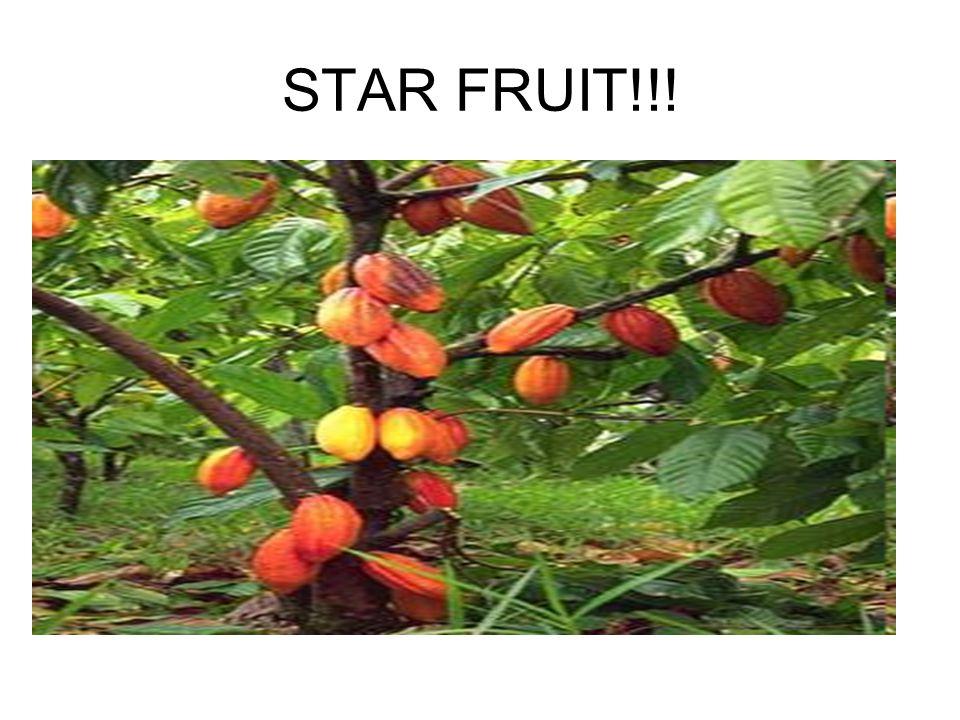STAR FRUIT!!!