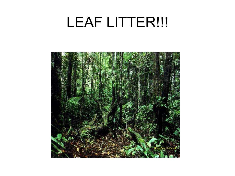 LEAF LITTER!!!