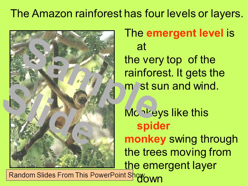 The emergent level is at the very top of the rainforest.
