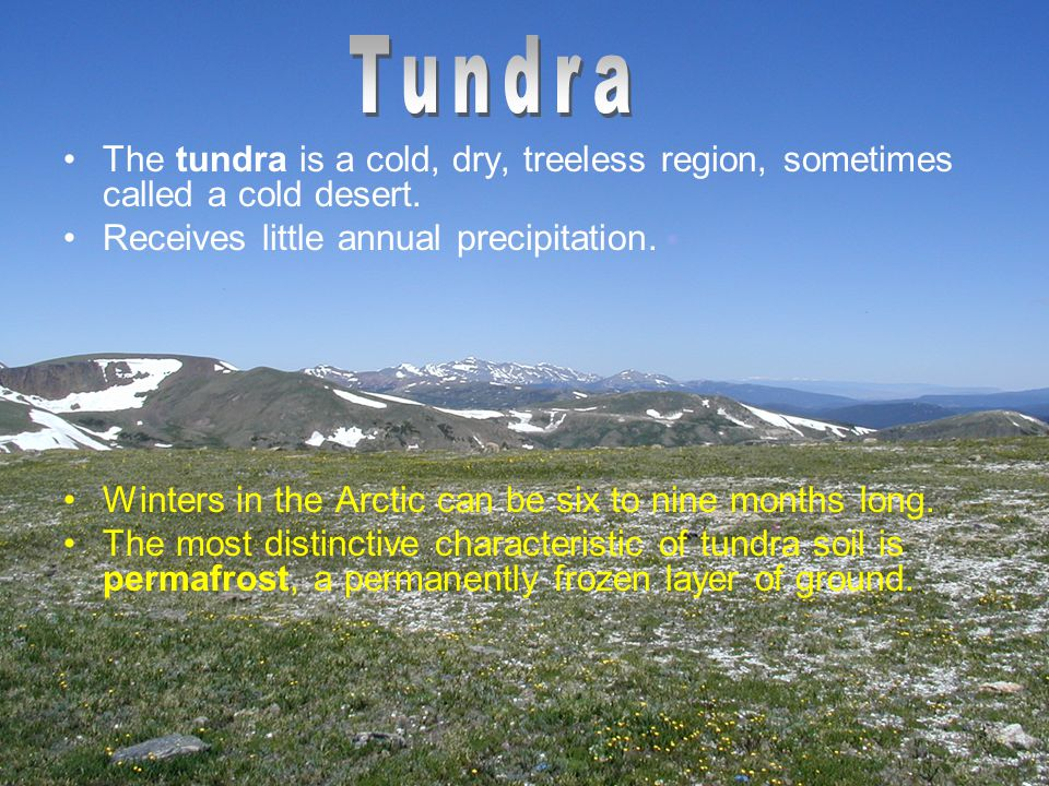 Tundra plants are adapted to drought and cold.Ex:) lichens, mosses, grasses, and small shrubs.