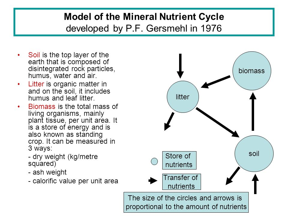 Model of the Mineral Nutrient Cycle developed by P.F.