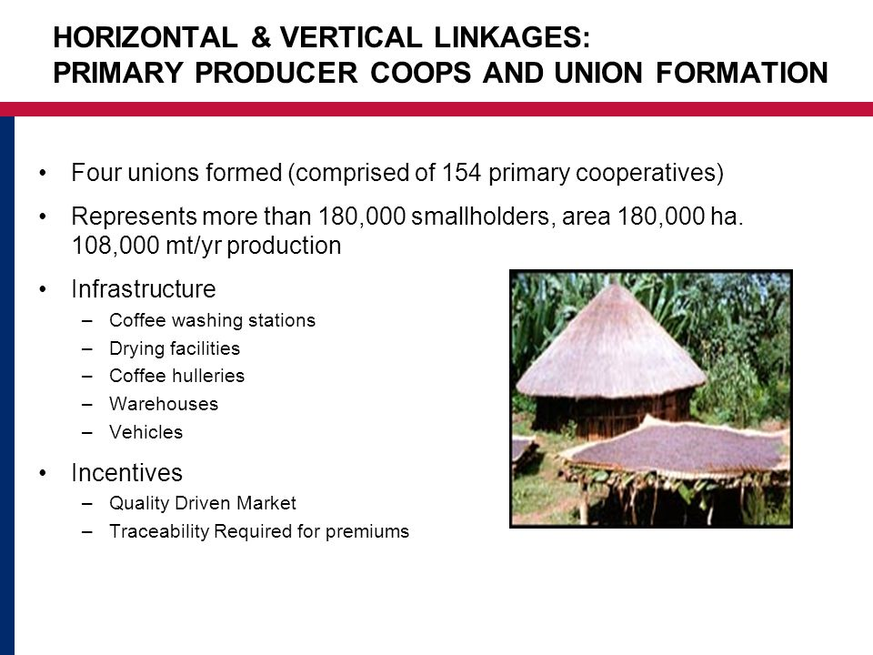 HORIZONTAL & VERTICAL LINKAGES: PRIMARY PRODUCER COOPS AND UNION FORMATION Four unions formed (comprised of 154 primary cooperatives) Represents more than 180,000 smallholders, area 180,000 ha.