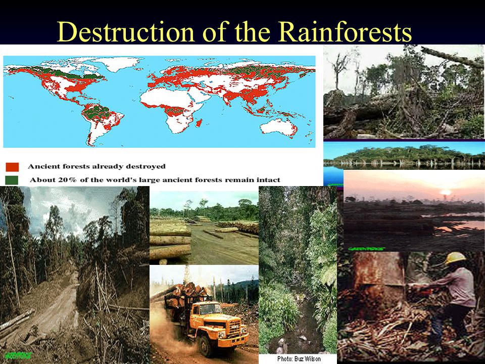 Major Pollution Source in the Rainforest is… Commercial Logging This causes the soil in the rainforest to get weaker then it already is. This also cau