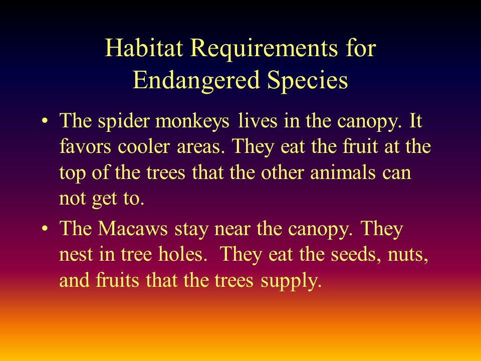 Endangered Species Macaws Spider Monkeys