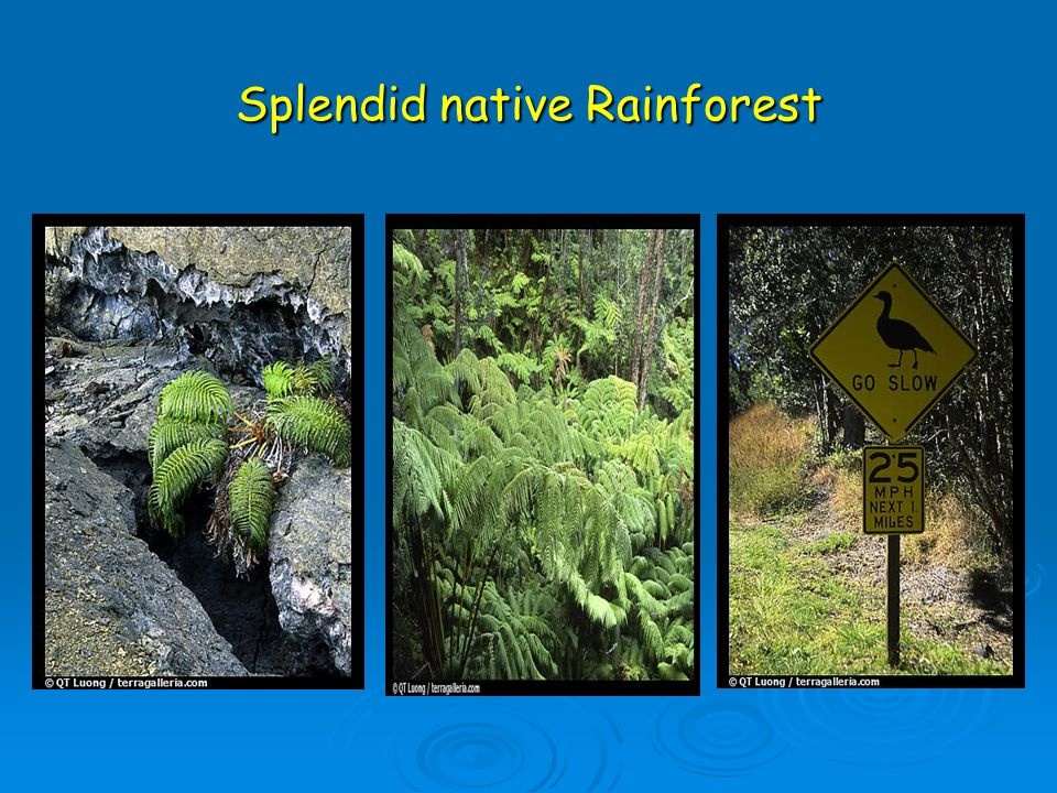 Splendid native Rainforest