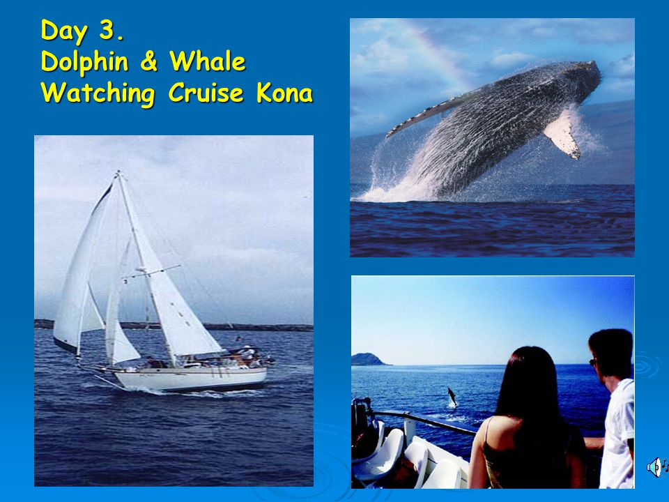 Day 3. Dolphin & Whale Watching Cruise Kona